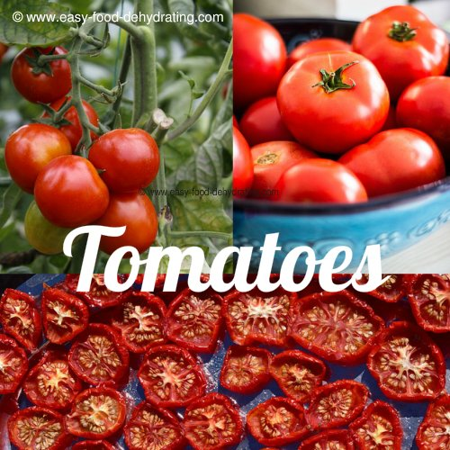 Tomato Trio: on the vine, in a bowl, and sundried