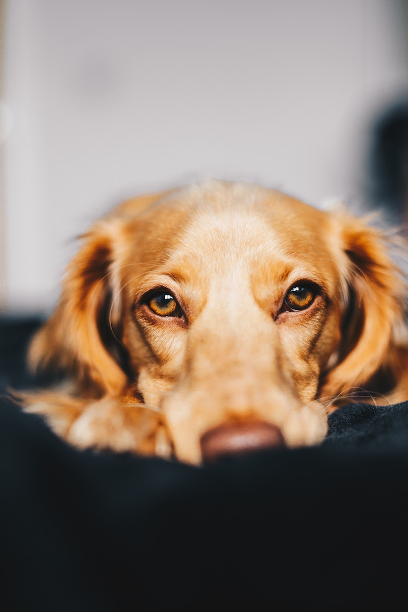 Unhappy Dog Photo by Ryan Walton on Unsplash