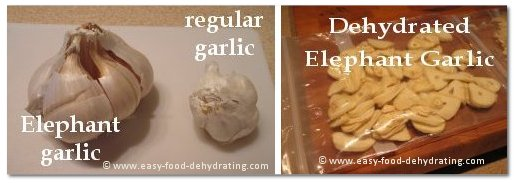 Regular and elephant garlic, left. Dehydrated garlic, right.