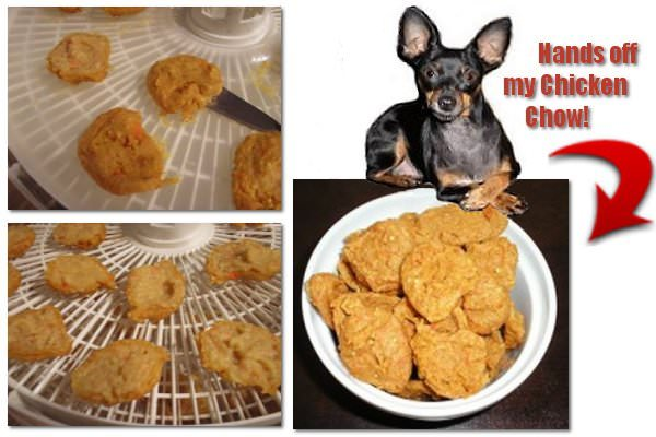 Our Miniature Pinscher with her homemade chicken chow that's been dehydrated