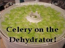 sliced celery on a Nesco dehydrator
