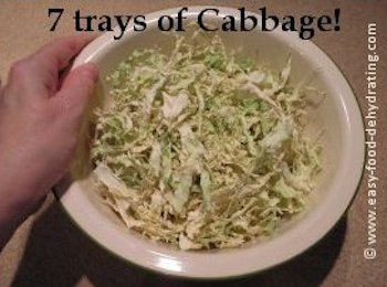 Dehydrated Cabbage in bowl showing 7 trays worth