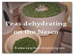 Peas dehydrating on Nesco dehydrator