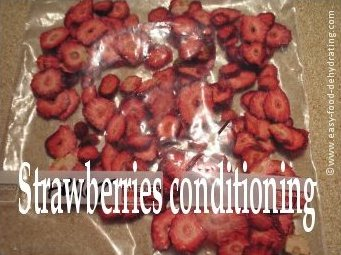 Dehydrated strawberries conditioning in a Ziploc bag