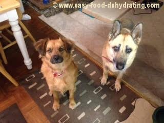 Dogs waiting for pet treats