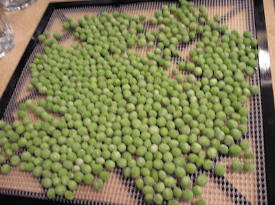dehydrating peas on Excalibur tray