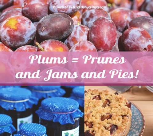 Plums = Prunes, Jams, and Pies!