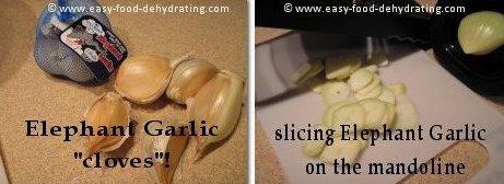 Elephant Garlic cloves before slicing on mandoline