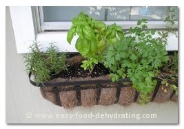 Rosemary, Basil, and Italian Parsley