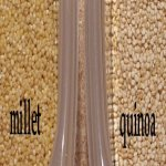 millet and quinoa side by side in tubs